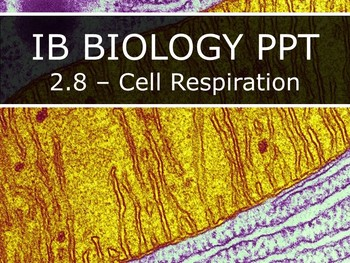 IB Biology (2016) - 2.8 - Cell Respiration PPT