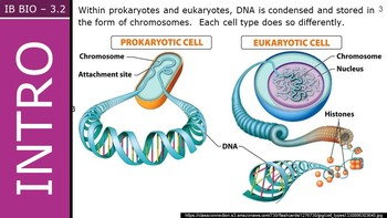 IB Biology (2016) - 3.2 - Chromosomes PPT