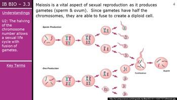 IB Biology (2016) - 3.3 - Meiosis PPT