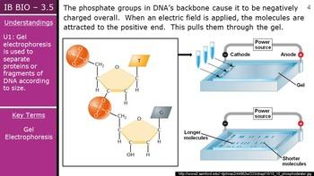 IB Biology (2016) - 3.5 - Genetic Modification & Biotechnology PPT