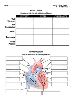 Blood vessel worksheet teaching resources teachers pay teachers ib biology 2016 62 heart structure blood vessels chart blank ccuart Image collections