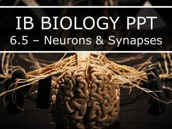 IB Biology (2016) - 6.5 - Neurons & Synapses PPT