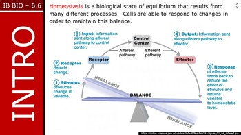 IB Biology (2016) - 6.6 - Hormones, Homeostasis & Reproduction PPT