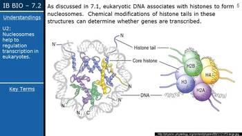IB Biology (2016) - 7.2 - Transcription & Gene Expression PPT