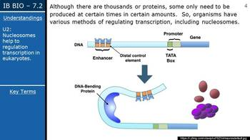 IB Biology (2016) - 7.2 - Transcription & Gene Expression PPT