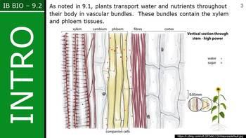 IB Biology (2016) - 9.2 - Transport in Phloem PPT