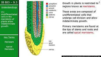 IB Biology (2016) - 9.3 - Growth in Plants PPT