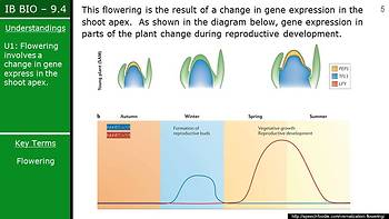 IB Biology (2016) - 9.4 - Reproduction in Plants PPT