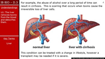 IB Biology (2016) - D.3 - Functions of the Liver PPT