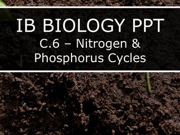 IB Biology (2016) - Option C.6 - Nitrogen & Phosphorus Cycles PPT