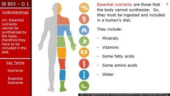 IB Biology (2016) - Option D.1 - Human Nutrition PPT