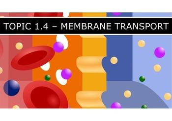 IB Biology (2016) - Topic 1 - Cell Biology - PPT BUNDLE!