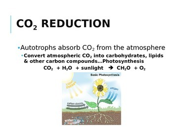 IB Biology - 4.3 - Ecology - Carbon Cycling - PowerPoint Presentation