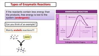 IB Biology HL Topic 8.1: Metabolism