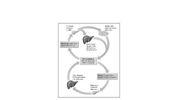 IB Biology Human Physiology 6.6 Video Lecture Student Handout (video link below)