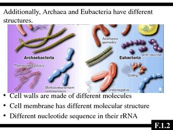 IB Biology - Topic F.1 - Diversity of Microbes PPT