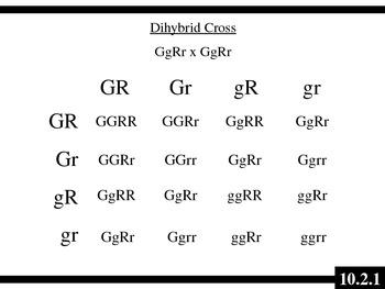 IB Biology (2009) - Topic 10.2 - Dihybrid Crosses PPT