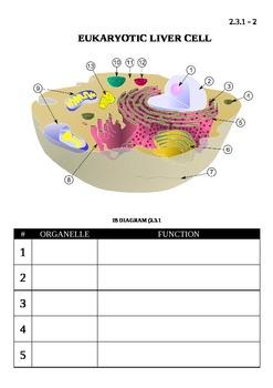 IB Biology (2009) - Topic 2.3 - Eukaryotic Cells Chart