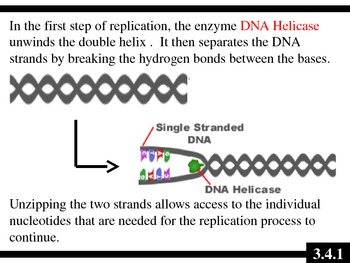 Ib Biology 2009 Topic 3 4 Dna Replication Ppt By Dokimi Science Ppts