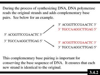 IB Biology (2009) - Topic 3.4 - DNA Replication PPT
