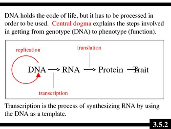 IB Biology (2009) - Topic 3.5 - Transcription & Translation PPT