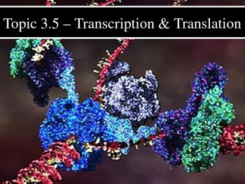 IB Biology (2009) - Topic 3.5 - Transcription & Translation PPT