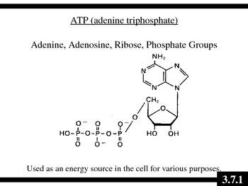 IB Biology (2009) - Topic 3.7 - Cellular Respiration