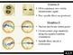 IB Biology (2009) - Topic 4.2 - Meiosis PPT