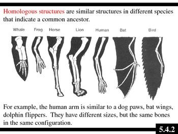 IB Biology (2009) - Topic 5.4 - Evolution PPT