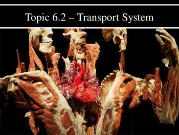 IB Biology (2009) - Topic 6.2 - Transport System PPT