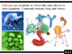 IB Biology (2009) - Topic 6.3 - Immune System PPT