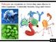 IB Biology (2009) - Topic 6.3 - Immune System PPT