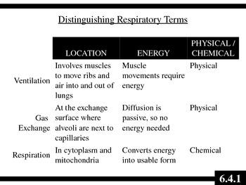 IB Biology (2009) - Topic 6.4 - Gas Exchange PPT