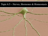 IB Biology (2009) - Topic 6.5 - Nerves, Hormones & Homeost