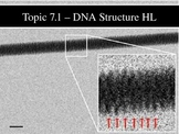 IB Biology (2009) - Topic 7.1 - DNA Structure HL PPT
