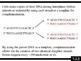 IB Biology (2009) - Topic 7.2 - DNA Replication HL PPT