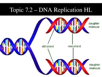 Dna replication teaching resources teachers pay teachers ib biology 2009 topic 72 dna replication hl ppt fandeluxe Gallery
