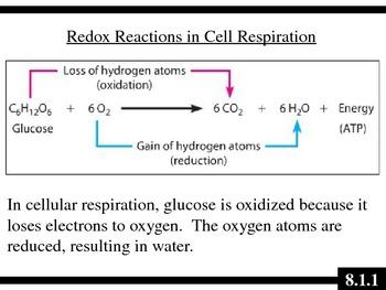 IB Biology (2009) - Topic 8.1 - Cellular Respiration HL PPT