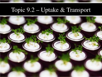 IB Biology (2009) - Topic 9.2 - Plant Transport PPT