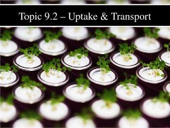 IB Biology (2009) - Topic 9.2 - Plant Transport PPT