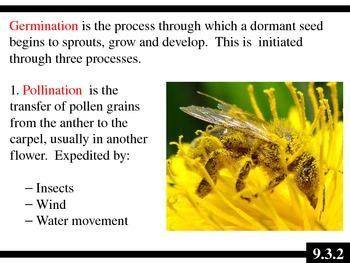 IB Biology (2009) - Topic 9.3 - Germination PPT