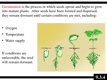 IB Biology (2009) - Topic 9.3 - Germination PPT