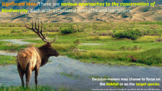 IB ESS Topic 3 Biodiversity and Conservation Bundle