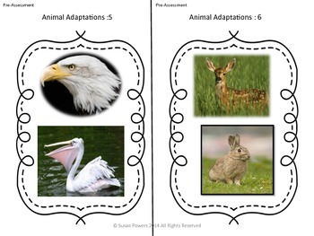 IB PYP Complete Science Unit of Inquiry Animal Adaptations Activities