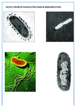 IBDP Biology 2.1 - Ultrastructure of cells