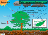 IDL Water- oxygen and carbon cycle