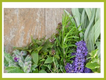 IEB Poetry: The Herb Garden PowerPoint Presentation