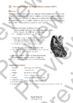 "IGCSE Poetry: ""Caged Skylark"" - Gerard Manley Hopkins (Lesson Worksheet + Guide)"