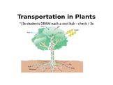 IGCSE Year 10.10 Transportation in Plants