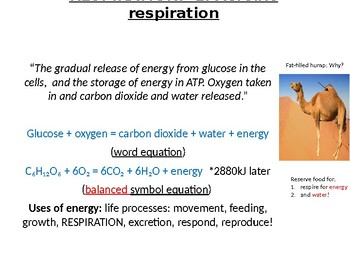 IGCSE Year 10.12 Respiration